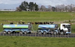 """Fonterra milk tanker drives past dairy cows as it arrives at Fonterra""""s Te Rapa plant near Hamilton, New Zealand, in this 6 August 2013 file photo"""