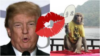 a monkey and donald trump
