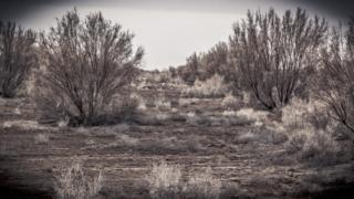 Saxaul trees on the Aral Sea bed in Uzbekistan by Paul Ivan Harris