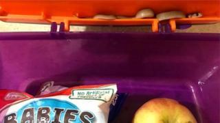 लंच बॉक्स में सांप