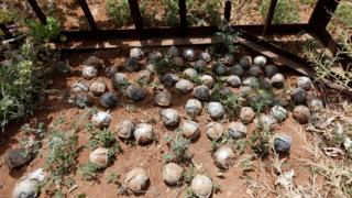 Cluster bomblets gathered in a field in southern Idlib province, Syria (21 May 2016)