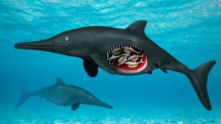 An illustration of the ichthyosaur