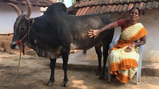 Selvarani with her bull Ramu