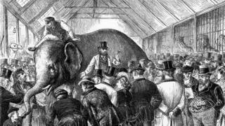 An engraving showing a Victorian auction of an elephant