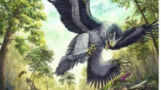 Some groups of beaked birds may have been able to survive the extinction