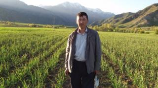 Көлдүк ишкер Элдияр Абдыкеримов органикалык сарымсак тигип, түшүмүн сатып ишкерлик кылат