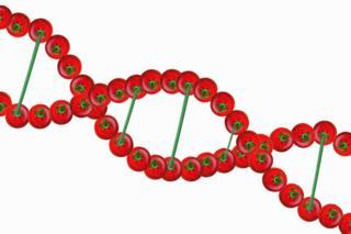 Визуализация спирали ДНК из помидоров