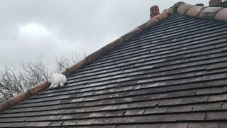 Rabbit on the roof