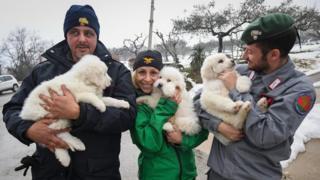 Спасенные щенки