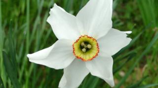 The narcissus eye of Narcissus