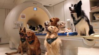 Perros junto al escáner de resonancia magnética.