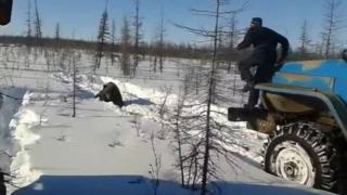 видео расправы над медведем