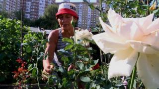 Троянди - слабкість пані Наталі