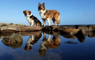 Anna Murray, Edinburgh took this picture of her handsome hounds Shadow and Storm on a beautiful day last weekend at Tyninghame Beach