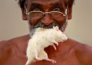 Hombre mascando un ratón