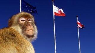 直布羅陀的小猴