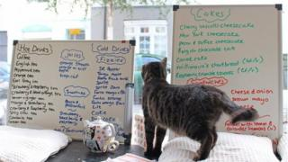 Cat looking at the menu inside Cats, Cakes and Coffee