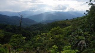 View of the Peruvian jungle