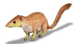 Early mammal Purgatorius unio