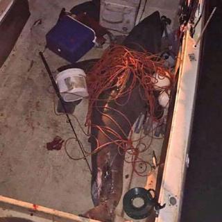 Tekneye atlayan köpek balığı