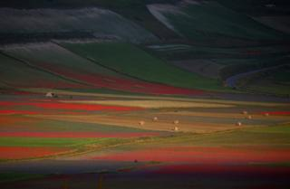 A view of fields of flowers in Castelluccio di Norcia near Perugia, Italy