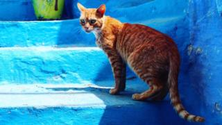 Cat in Morocco