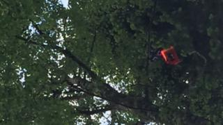 Balloon in tree
