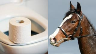 Toilet and horse