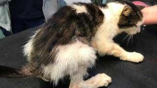 The black and white tabby who was dumped in a bin