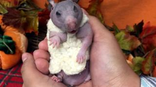 A sweater-clad hamster in someone's hands
