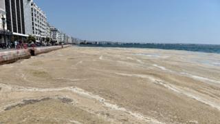 在希臘爆發的藻類潮,令海水看上去變成咖啡色