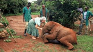 Dame Sheldrick is seen handling a baby elephant as three men and a baby zebra watch