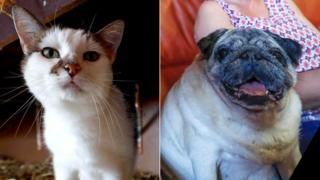 Composite photo of Azuria the cat and Ramses the Carlin dog