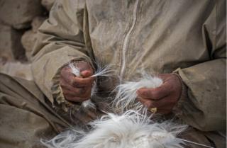 A shepherd holds goat hair