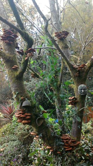 Dead tree covered in fungus and climbing plants