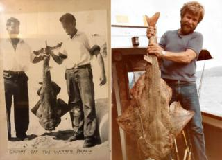Angel sharks caught off the Wales coast in the 60s and 70s