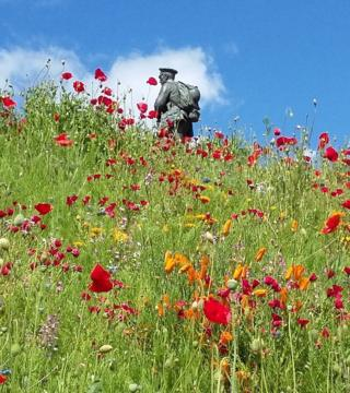 Poppies in a field by a War Memorial