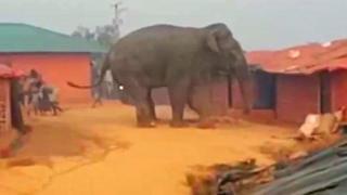 Elefante salvaje en un campo de refugiados en Bangladesh