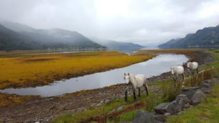 Horses by loch