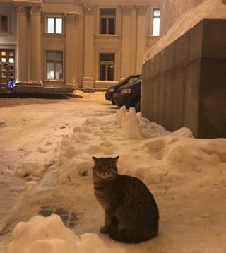 Кіт Амбассадор