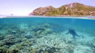 science Coral bleaching