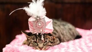 A-cat-wearing-a-pink-sparkly-turban.