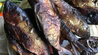 Bifaga fish