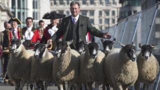 Alan Titchmarsh herding sheep