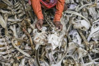 Mr. Lal rummages through a pile of bones
