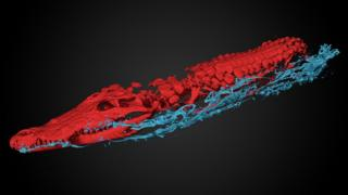 The 3D scan image showing the main crocodile in red and the smaller crocodiles in blue