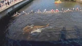 Pessoas em canal fazem corrente humana para desencalhar golfinhos