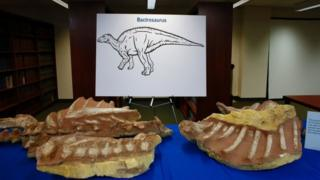 Fossils on display at the repatriation ceremony in New York (5 April 2016)