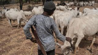 Un jeune éleveur prend soin de ses bêtes à Kaduna