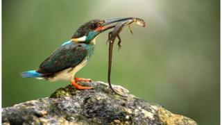 پرندہ